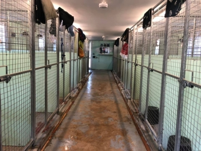 Greendale Farm Kennels and Cattery
